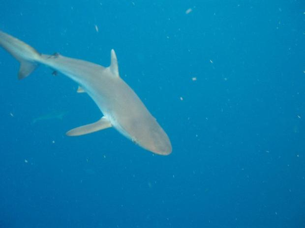 Shark Encounters are common but, rarely confrontational.