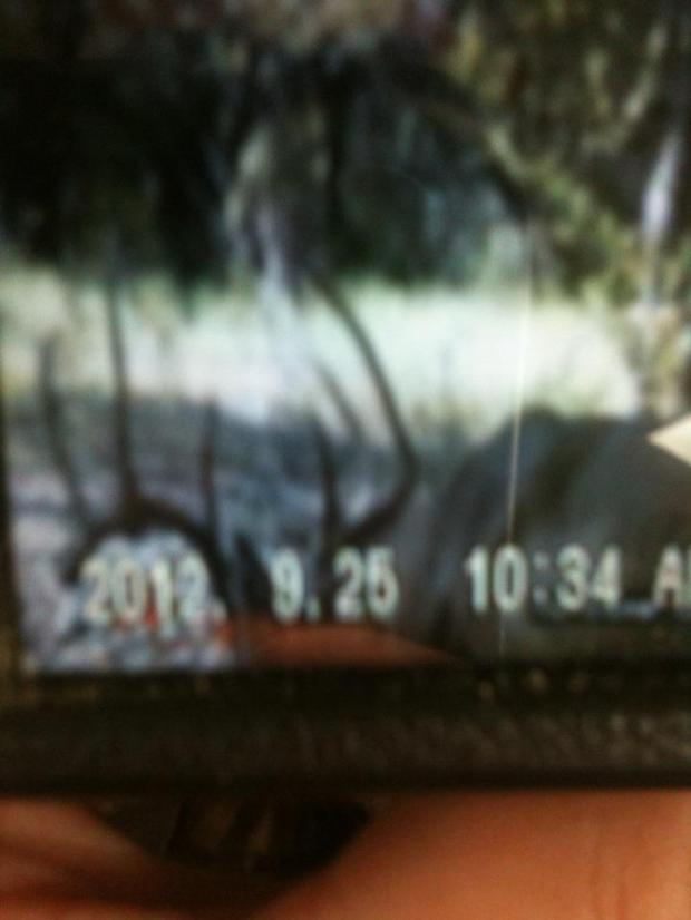 Dad's buck on trail cam a few weeks before the season opened.