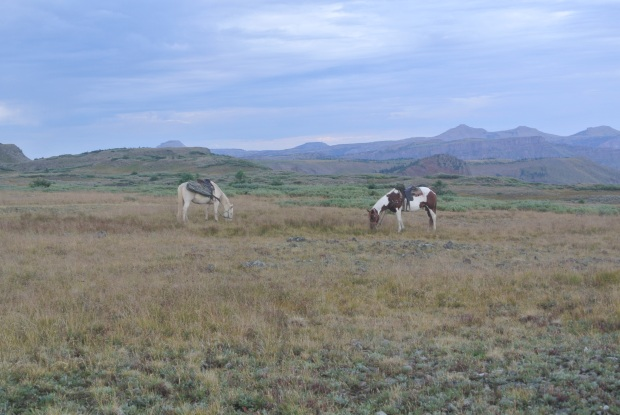 Elk hunt 2013 027