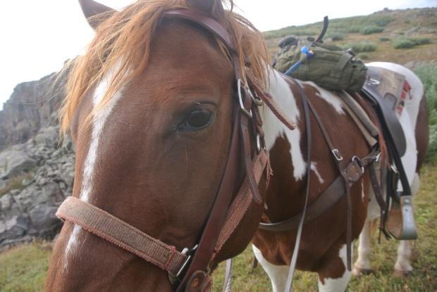 Travis' horse Sassy Fras
