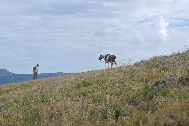 Elk hunt 2013 053