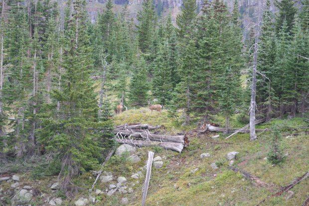A few mule deer we ran across as we moved camp.